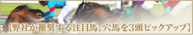 万馬券キングダム【注目馬を3頭ピックアップ】